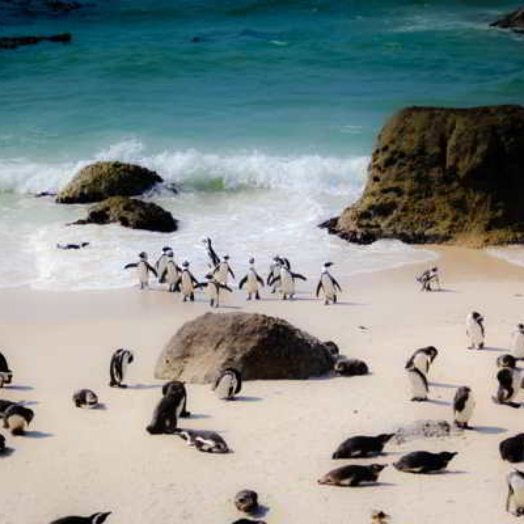 See Penguins