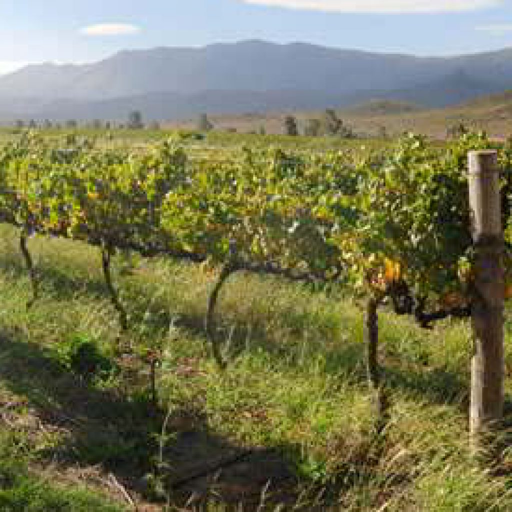 Orange River wine route