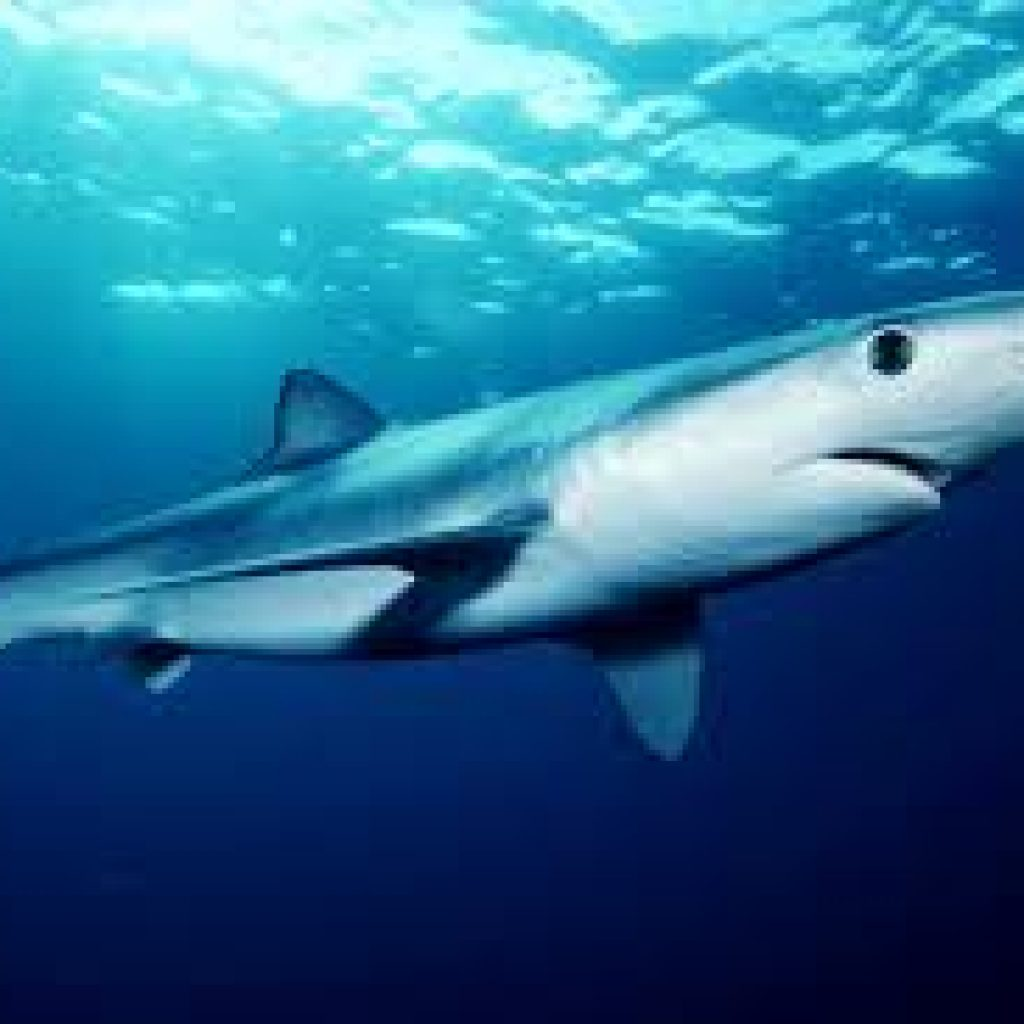 Dive with Blue and Mako Sharks