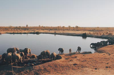 greenlife-safari-zimbabwe
