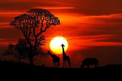 safari-hwange-national-park-zimbabwe