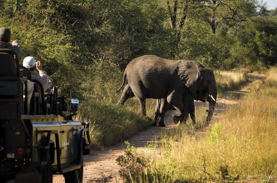 safari-sabi-sabi-game-reserve