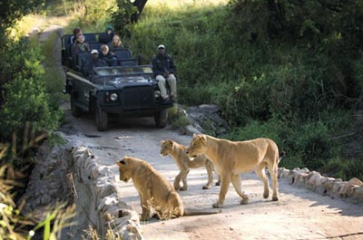 safarikruger-park-south-africa